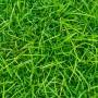 Küchenplatte Gras