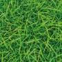 Dekotischläufer Gras